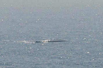 140---Blue-whale---MM7 9694